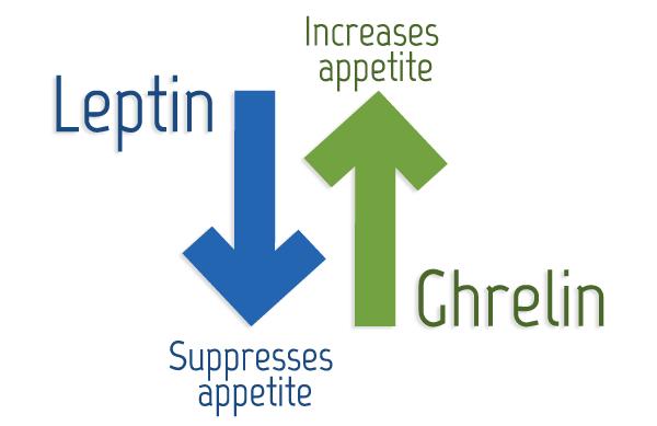 Hormoni - Leptin